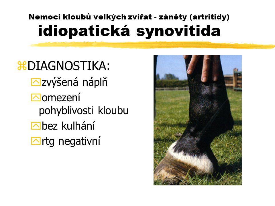 Nemoci kloubů velkých zvířat - záněty (artritidy) idiopatická synovitida zDIAGNOSTIKA: yzvýšená náplň yomezení pohyblivosti kloubu ybez kulhání yrtg negativní