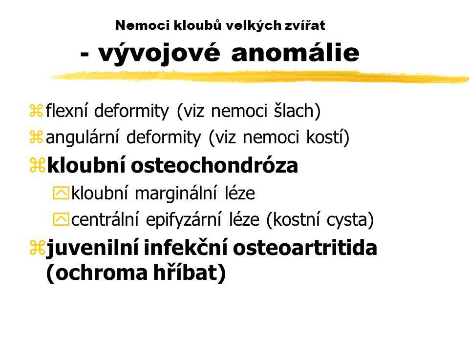 Nemoci kloubů velkých zvířat - vývojové anomálie zflexní deformity (viz nemoci šlach) zangulární deformity (viz nemoci kostí) zkloubní osteochondróza ykloubní marginální léze ycentrální epifyzární léze (kostní cysta) zjuvenilní infekční osteoartritida (ochroma hříbat)