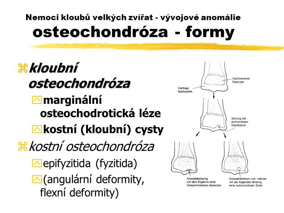Nemoci kloubů velkých zvířat - vývojové anomálie osteochondróza - formy zkloubní osteochondróza ymarginální osteochodrotická léze ykostní (kloubní) cysty zkostní osteochondróza yepifyzitida (fyzitida) y(angulární deformity, flexní deformity)