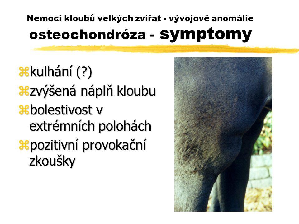 Nemoci kloubů velkých zvířat - vývojové anomálie osteochondróza - symptomy zkulhání (?) zzvýšená náplň kloubu zbolestivost v extrémních polohách zpozitivní provokační zkoušky