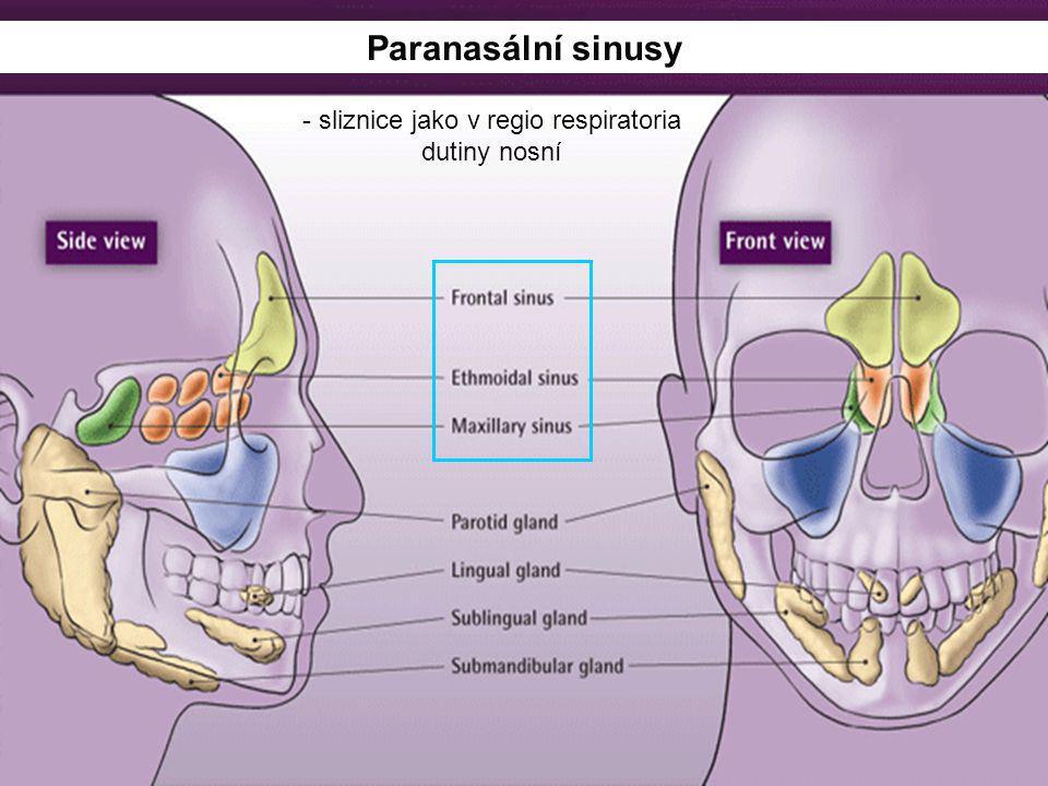Paranasální sinusy - sliznice jako v regio respiratoria dutiny nosní