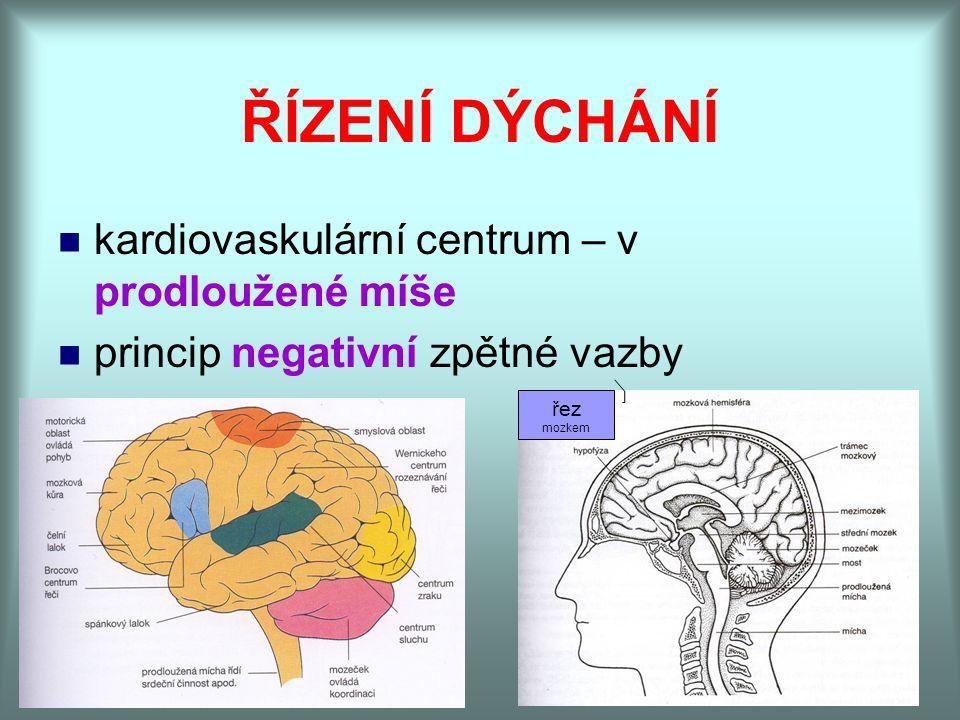ŘÍZENÍ DÝCHÁNÍ kardiovaskulární centrum – v prodloužené míše princip negativní zpětné vazby řez mozkem
