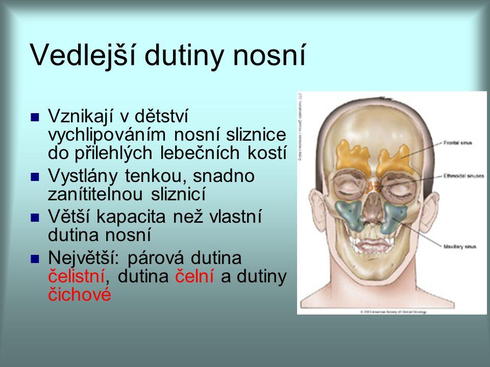 Vedlejší dutiny nosní Vznikají v dětství vychlipováním nosní sliznice do přilehlých lebečních kostí Vystlány tenkou, snadno zanítitelnou sliznicí Větš