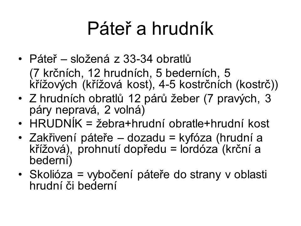 Páteř a hrudník Páteř – složená z 33-34 obratlů (7 krčních, 12 hrudních, 5 bederních, 5 křížových (křížová kost), 4-5 kostrčních (kostrč)) Z hrudních