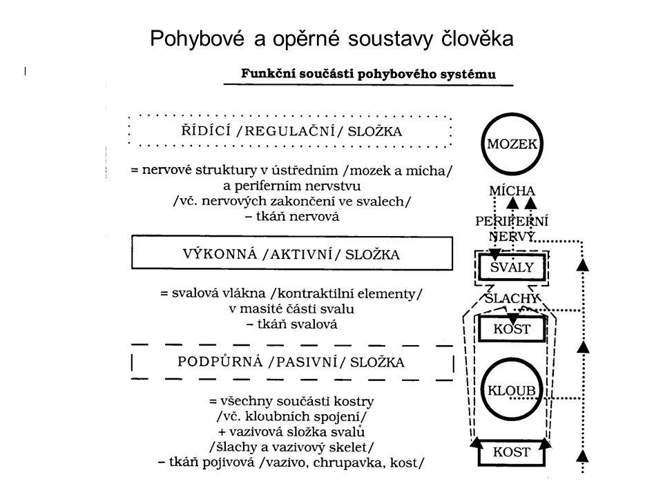 Pohybové a opěrné soustavy člověka I