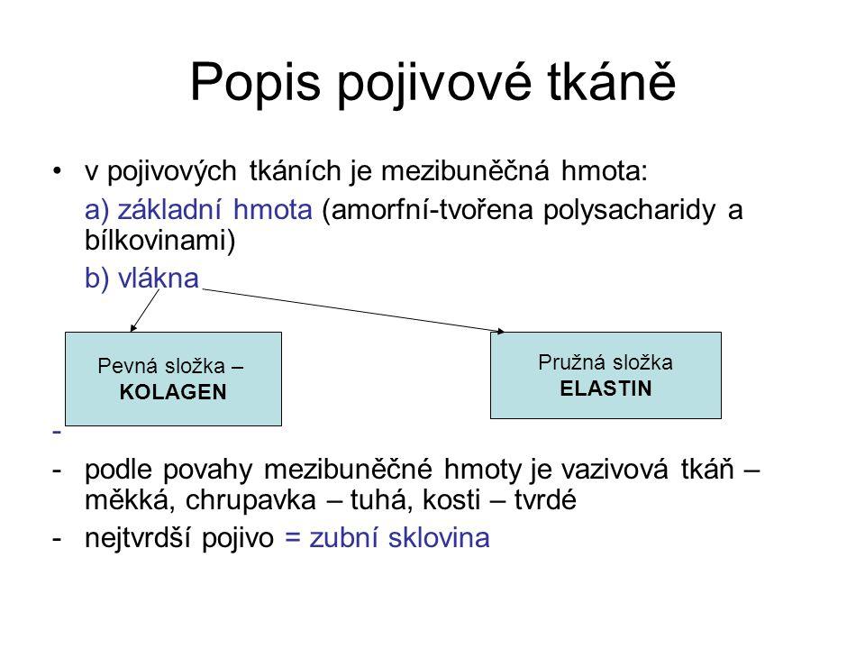 Popis pojivové tkáně v pojivových tkáních je mezibuněčná hmota: a) základní hmota (amorfní-tvořena polysacharidy a bílkovinami) b) vlákna - -podle pov