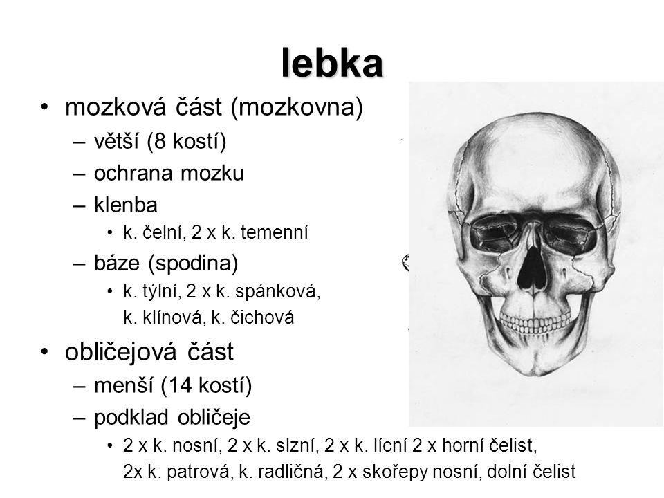 lebka mozková část (mozkovna) –větší (8 kostí) –ochrana mozku –klenba k. čelní, 2 x k. temenní –báze (spodina) k. týlní, 2 x k. spánková, k. klínová,