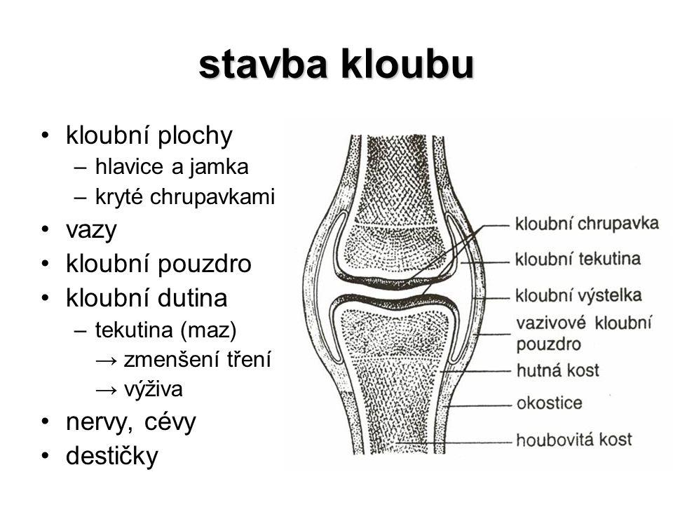 dolní končetina volná končetina –stehenní kost krček –čéška ve šlaše čtyřhlavého stehenního svalu –kost holenní vnitřní kotník –kost lýtková vnější kotník