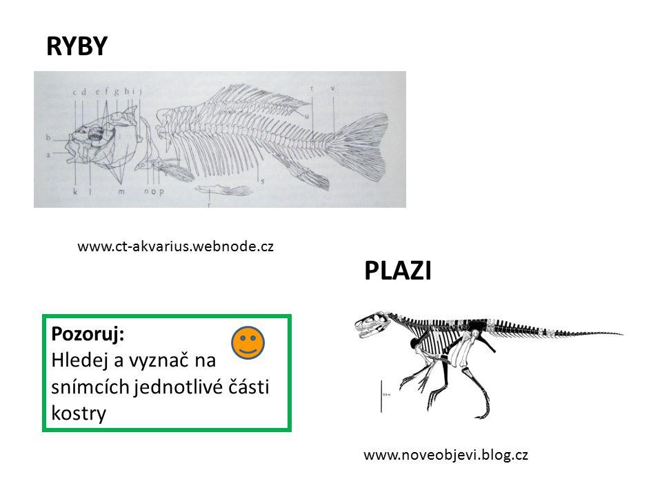www.ct-akvarius.webnode.cz www.noveobjevi.blog.cz RYBY PLAZI Pozoruj: Hledej a vyznač na snímcích jednotlivé části kostry