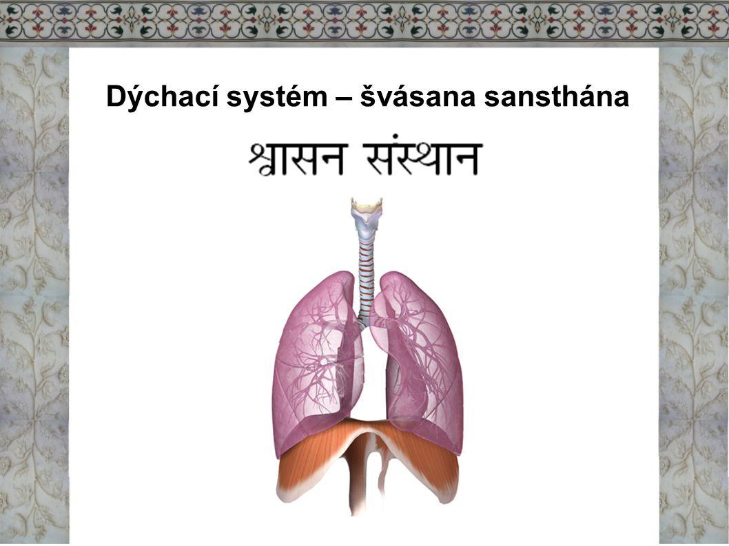 Dýchání/švása Při výdechu se z plic nedostane všechen vzduch a ten co zůstává představuje tzv.
