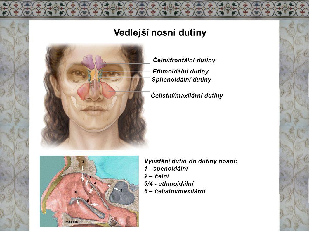 Vedlejší nosní dutiny Čelní/frontální dutiny Ethmoidální dutiny Sphenoidální dutiny Čelistní/maxilární dutiny Vyústění dutin do dutiny nosní: 1 - spen