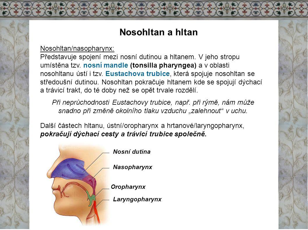 Nosohltan a hltan Nosohltan/nasopharynx: Představuje spojení mezi nosní dutinou a hltanem. V jeho stropu umístěna tzv. nosní mandle (tonsilla pharynge