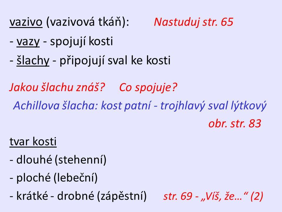 vazivo (vazivová tkáň): Nastuduj str.