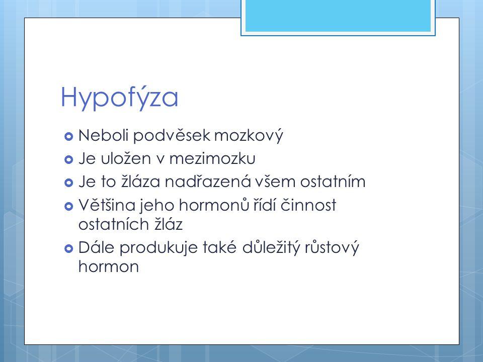 Hypofýza  Neboli podvěsek mozkový  Je uložen v mezimozku  Je to žláza nadřazená všem ostatním  Většina jeho hormonů řídí činnost ostatních žláz 