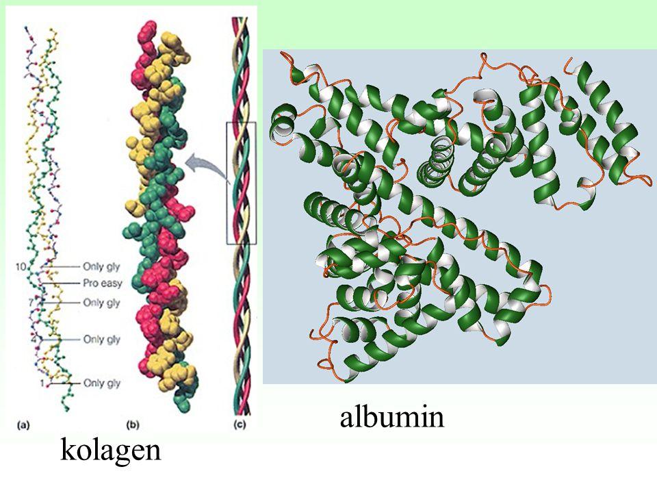 kolagen albumin