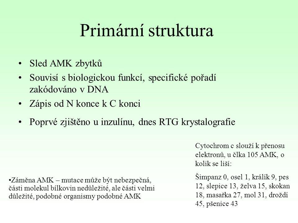 Primární struktura Sled AMK zbytků Souvisí s biologickou funkcí, specifické pořadí zakódováno v DNA Zápis od N konce k C konci Poprvé zjištěno u inzul