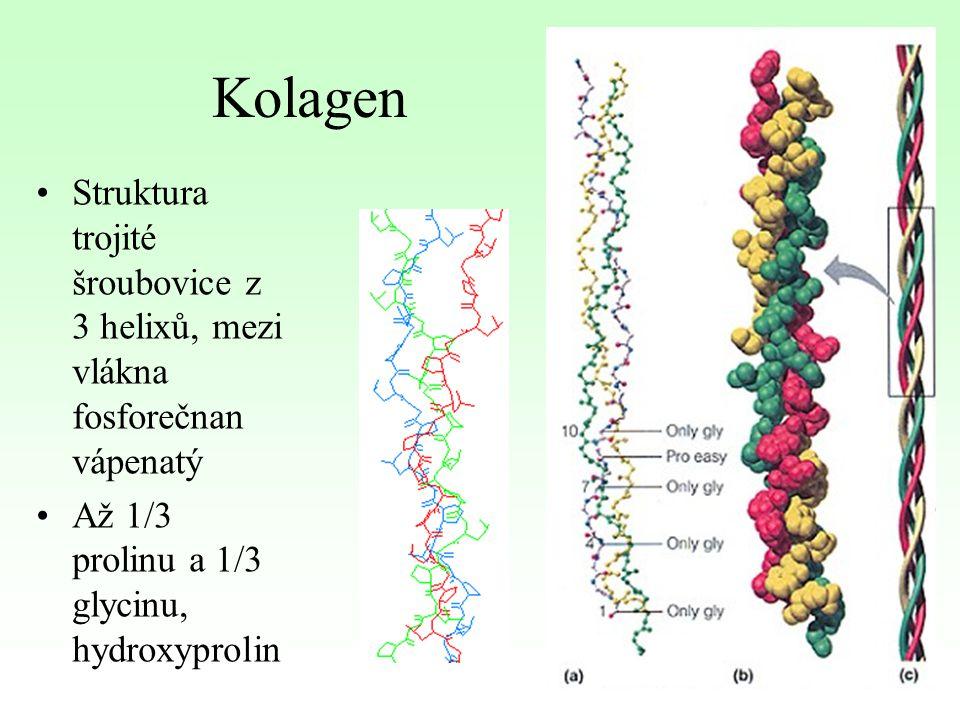 Kolagen Struktura trojité šroubovice z 3 helixů, mezi vlákna fosforečnan vápenatý Až 1/3 prolinu a 1/3 glycinu, hydroxyprolin