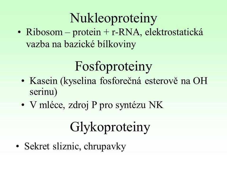 Nukleoproteiny Ribosom – protein + r-RNA, elektrostatická vazba na bazické bílkoviny Fosfoproteiny Kasein (kyselina fosforečná esterově na OH serinu)
