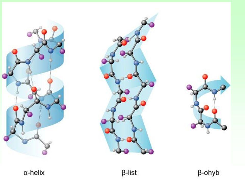 α -šroubovice α – helix nejběžnější šroubovice 3,6 AMK/1 závit R ven Vodíkové můstky Ruší prolin (nemá H) Nepravidelné Hojné v proteinech buněčných membrán (transportní, receptory).