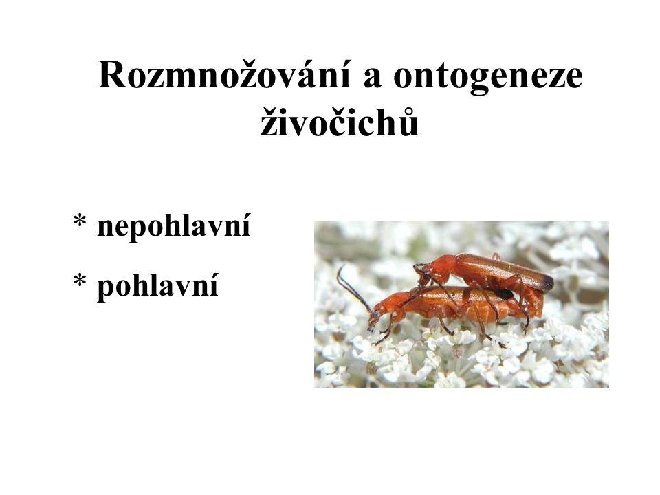 Rozmnožování a ontogeneze živočichů * nepohlavní * pohlavní