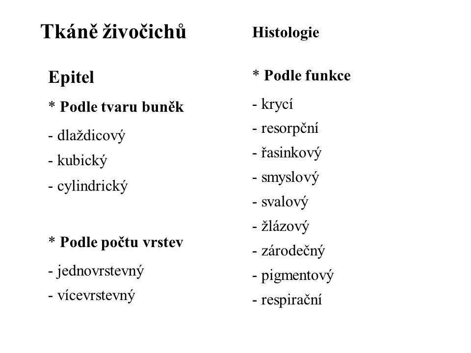 Tkáně živočichů Epitel * Podle tvaru buněk - dlaždicový - kubický - cylindrický * Podle počtu vrstev - jednovrstevný - vícevrstevný * Podle funkce - krycí - resorpční - řasinkový - smyslový - svalový - žlázový - zárodečný - pigmentový - respirační Histologie