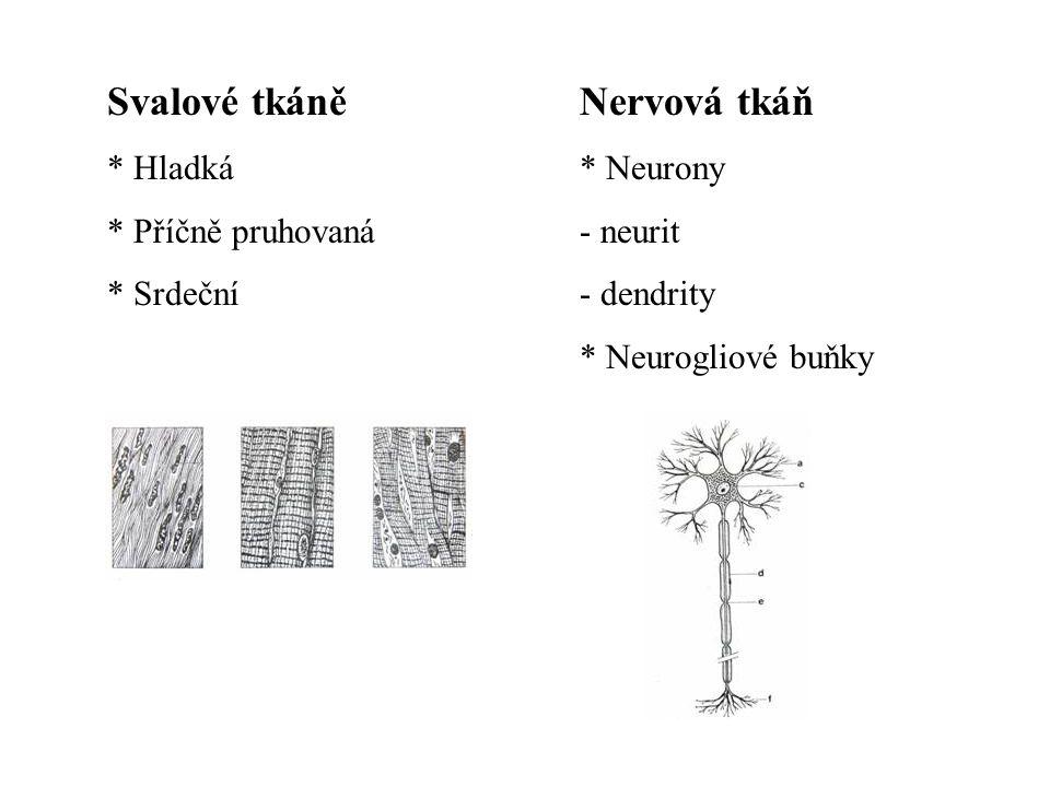 Svalové tkáně * Hladká * Příčně pruhovaná * Srdeční Nervová tkáň * Neurony - neurit - dendrity * Neurogliové buňky