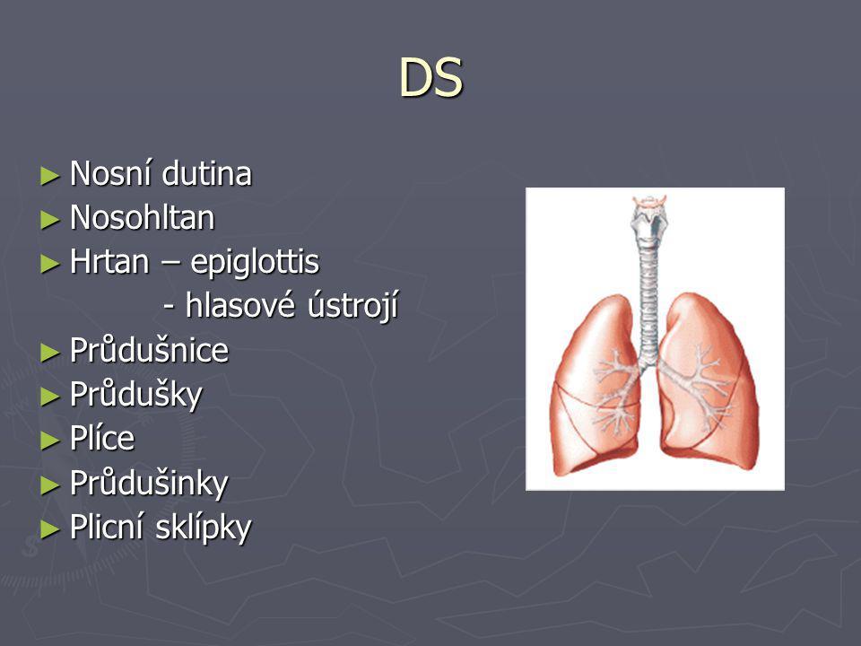 DS ► Nosní dutina ► Nosohltan ► Hrtan – epiglottis - hlasové ústrojí - hlasové ústrojí ► Průdušnice ► Průdušky ► Plíce ► Průdušinky ► Plicní sklípky