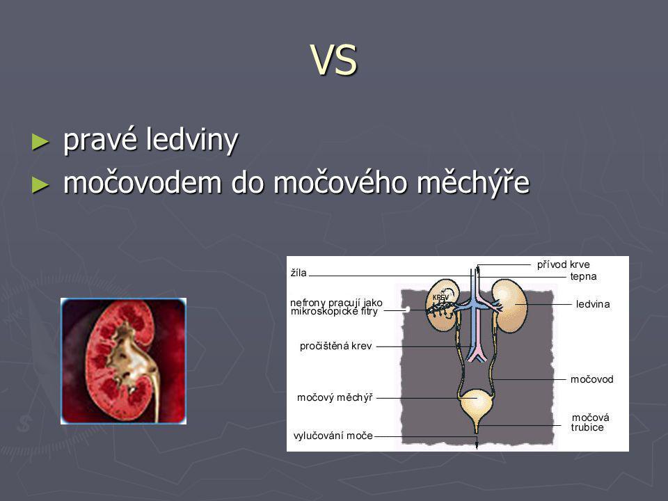 VS ► pravé ledviny ► močovodem do močového měchýře