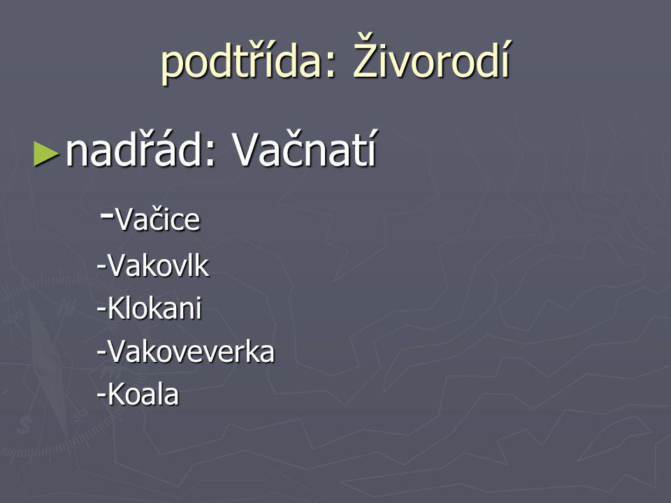 podtřída: Živorodí ► nadřád: Vačnatí - Vačice - Vačice-Vakovlk-Klokani-Vakoveverka-Koala