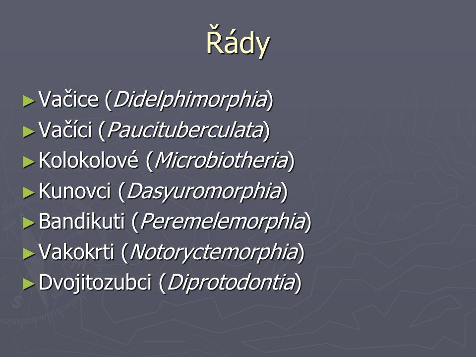 Řády ► Vačice (Didelphimorphia) ► Vačíci (Paucituberculata) ► Kolokolové (Microbiotheria) ► Kunovci (Dasyuromorphia) ► Bandikuti (Peremelemorphia) ► Vakokrti (Notoryctemorphia) ► Dvojitozubci (Diprotodontia)