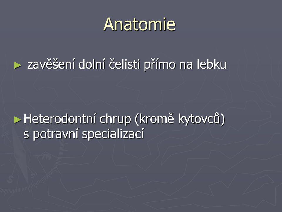 Anatomie ► zavěšení dolní čelisti přímo na lebku ► Heterodontní chrup (kromě kytovců) s potravní specializací
