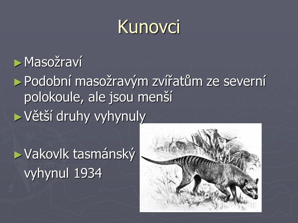 Kunovci ► Masožraví ► Podobní masožravým zvířatům ze severní polokoule, ale jsou menší ► Větší druhy vyhynuly ► Vakovlk tasmánský vyhynul 1934