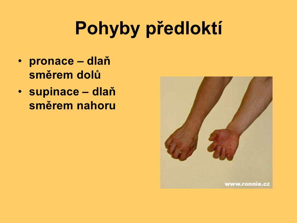 Pohyby předloktí pronace – dlaň směrem dolů supinace – dlaň směrem nahoru