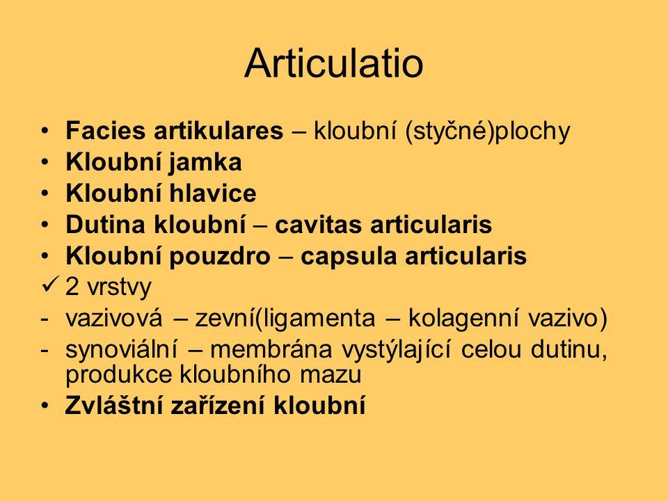 Articulatio Facies artikulares – kloubní (styčné)plochy Kloubní jamka Kloubní hlavice Dutina kloubní – cavitas articularis Kloubní pouzdro – capsula a