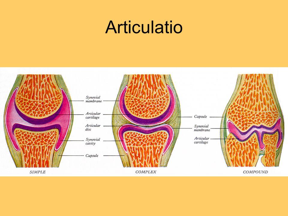 cavitas articularis – kloubní dutina: štěrbina mezi styčnými plochami a pouzdrem kloubu endoskopie – náplň vzduchem a následná diagnostika patologie - náplň krví nebo zánětlivým výpotkem