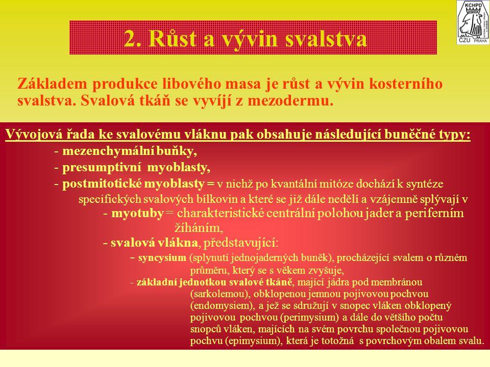 2. Růst a vývin svalstva Základem produkce libového masa je růst a vývin kosterního svalstva. Svalová tkáň se vyvíjí z mezodermu. Vývojová řada ke sva