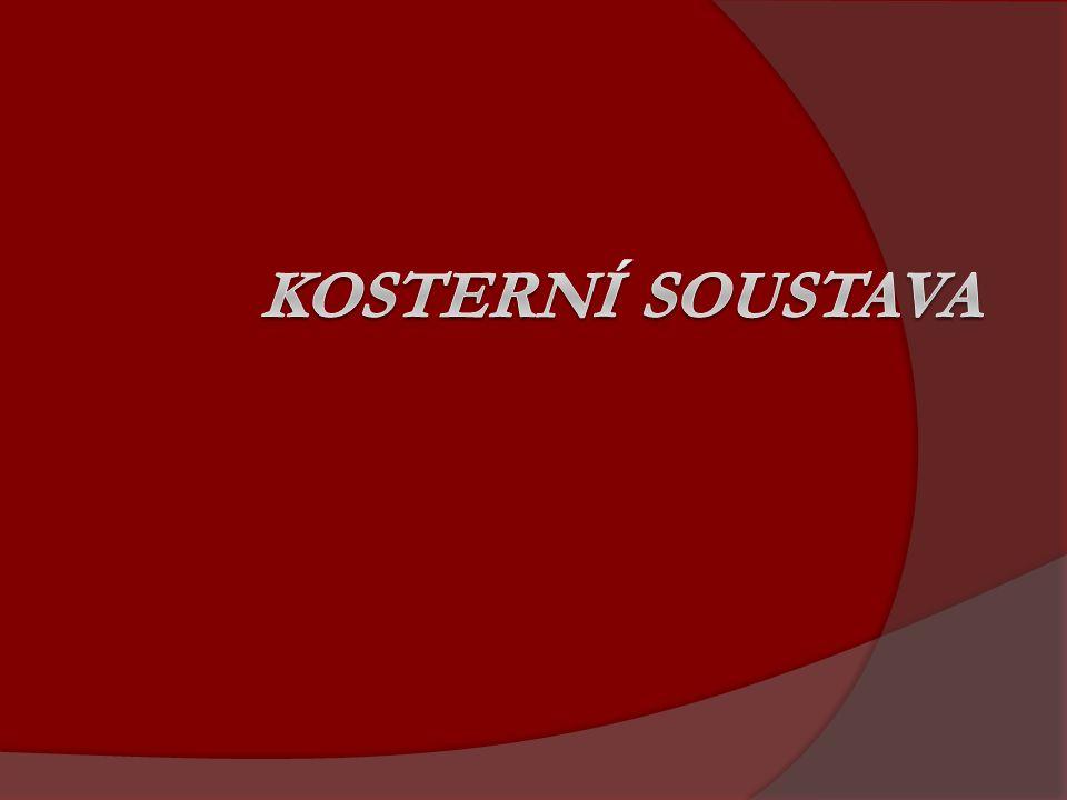 Pohybový systém  -pasivní (soustava kosterní a kloubní)  -aktivní (soustava svalová)