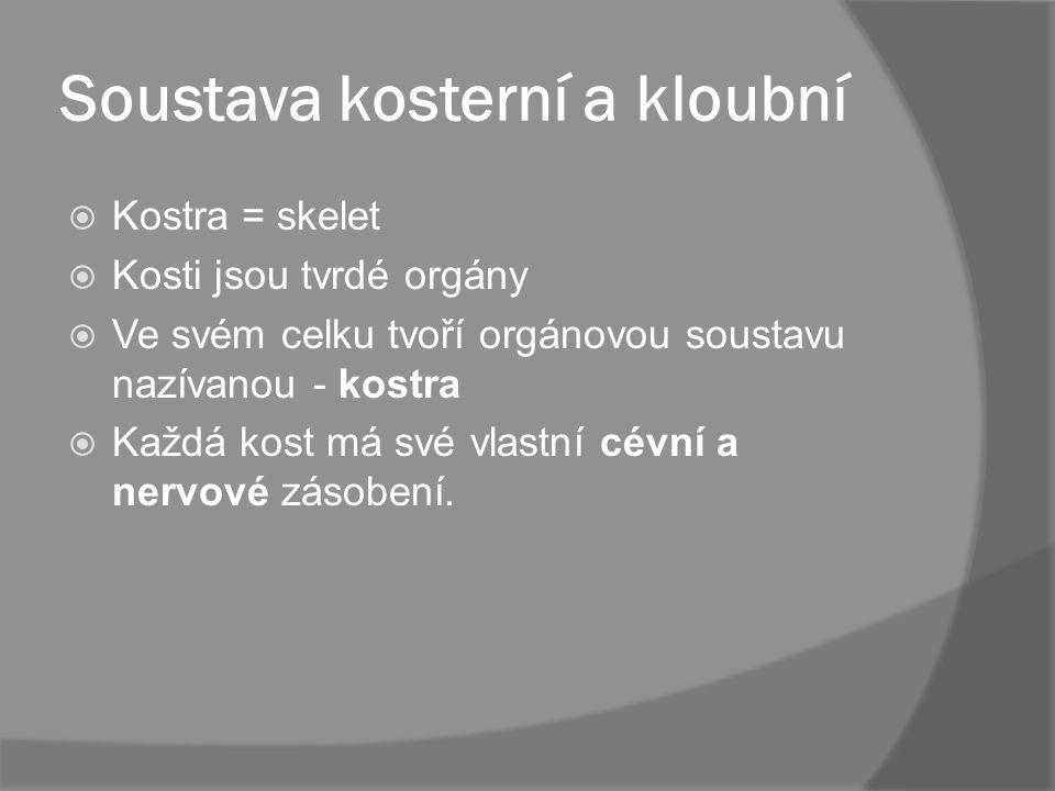 Soustava kosterní a kloubní KKostra = skelet KKosti jsou tvrdé orgány VVe svém celku tvoří orgánovou soustavu nazívanou - kostra KKaždá kost m