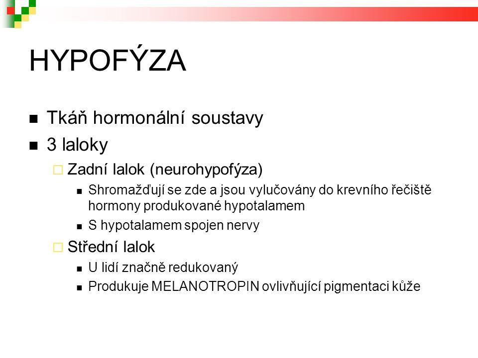 HYPOFÝZA Tkáň hormonální soustavy 3 laloky  Zadní lalok (neurohypofýza) Shromažďují se zde a jsou vylučovány do krevního řečiště hormony produkované hypotalamem S hypotalamem spojen nervy  Střední lalok U lidí značně redukovaný Produkuje MELANOTROPIN ovlivňující pigmentaci kůže
