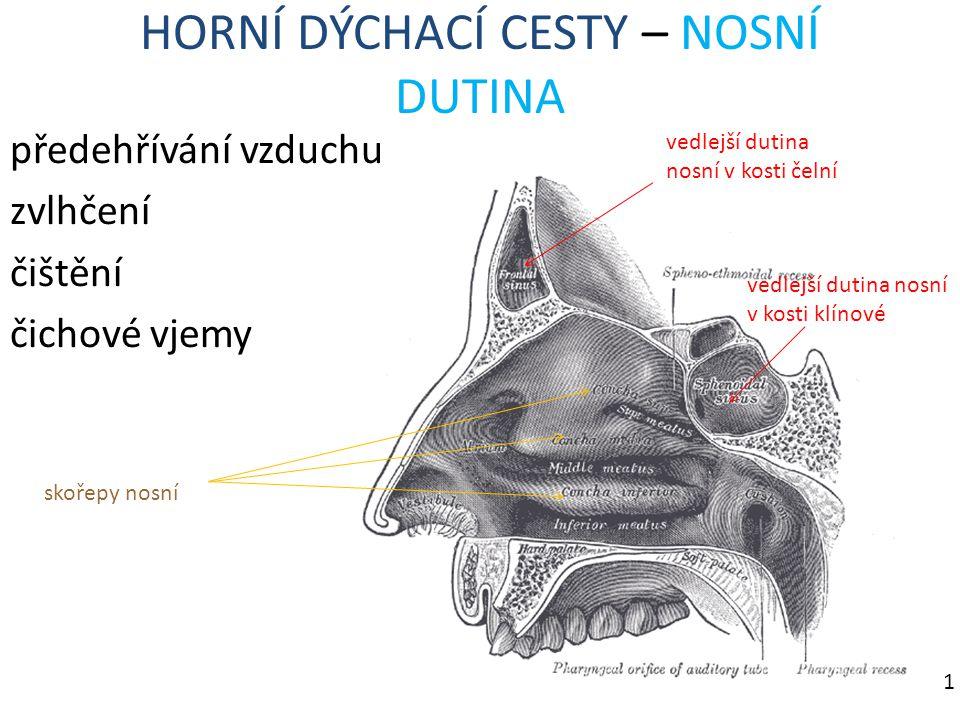 HORNÍ DÝCHACÍ CESTY – NOSNÍ DUTINA předehřívání vzduchu zvlhčení čištění čichové vjemy vedlejší dutina nosní v kosti čelní vedlejší dutina nosní v kos