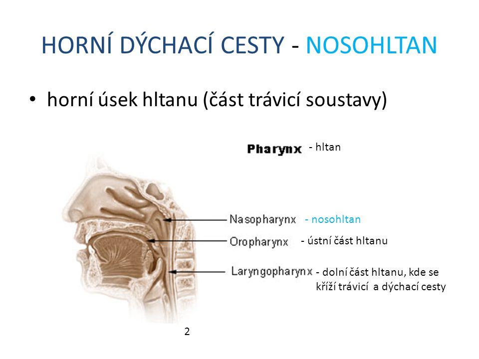 HORNÍ DÝCHACÍ CESTY - NOSOHLTAN horní úsek hltanu (část trávicí soustavy) 2 - nosohltan - dolní část hltanu, kde se kříží trávicí a dýchací cesty - hl