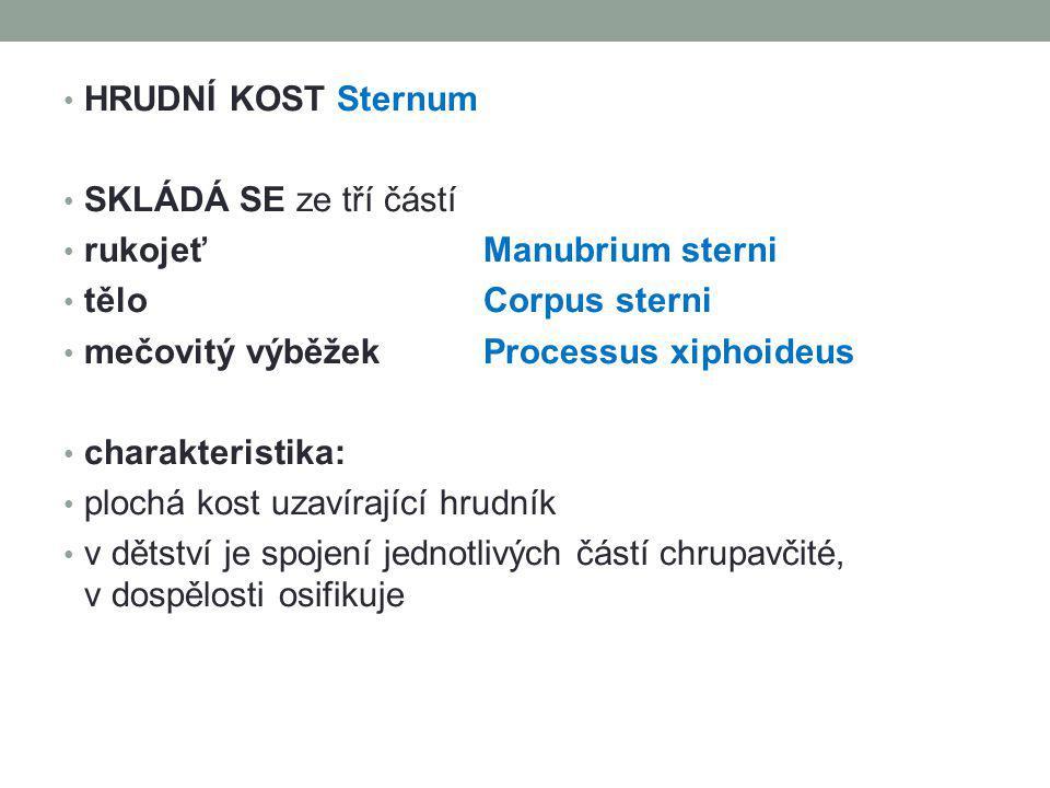 HRUDNÍ KOST Sternum SKLÁDÁ SE ze tří částí rukojeť Manubrium sterni tělo Corpus sterni mečovitý výběžekProcessus xiphoideus charakteristika: plochá ko