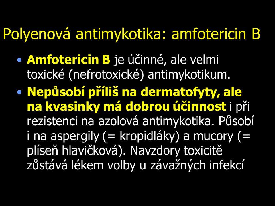 Polyenová antimykotika: amfotericin B Amfotericin B je účinné, ale velmi toxické (nefrotoxické) antimykotikum. Nepůsobí příliš na dermatofyty, ale na