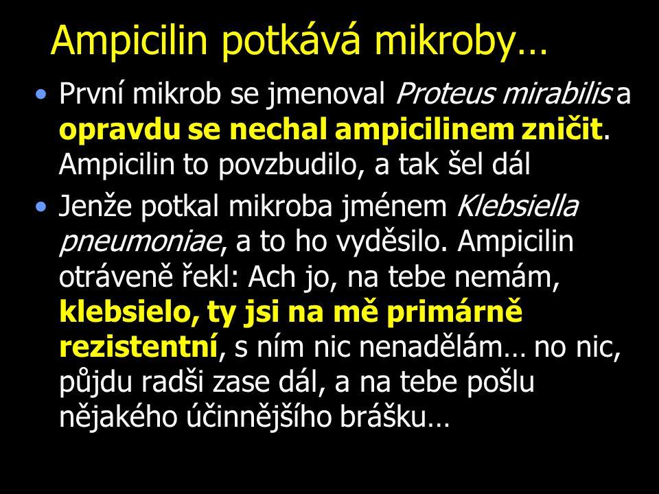 Ampicilin potkává mikroby… První mikrob se jmenoval Proteus mirabilis a opravdu se nechal ampicilinem zničit. Ampicilin to povzbudilo, a tak šel dál J