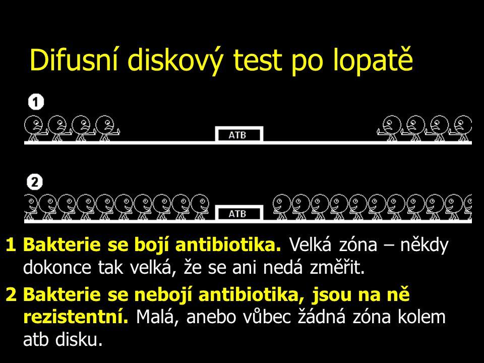 Difusní diskový test po lopatě 1 Bakterie se bojí antibiotika. Velká zóna – někdy dokonce tak velká, že se ani nedá změřit. 2 Bakterie se nebojí antib