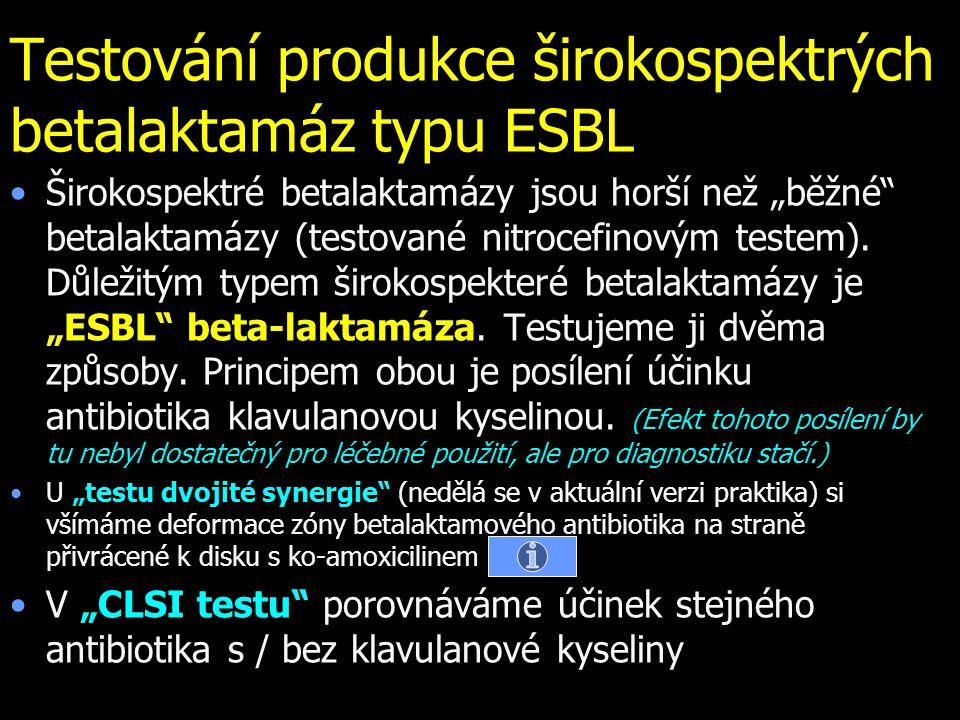 """Testování produkce širokospektrých betalaktamáz typu ESBL Širokospektré betalaktamázy jsou horší než """"běžné"""" betalaktamázy (testované nitrocefinovým t"""