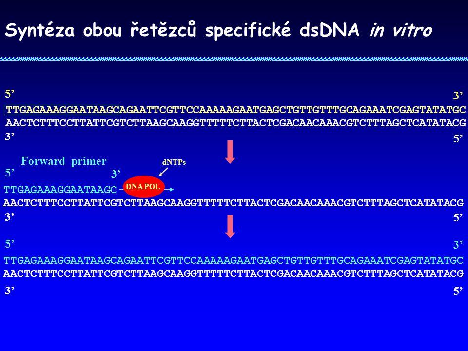 Syntéza obou řetězců specifické dsDNA in vitro TTGAGAAAGGAATAAGCAGAATTCGTTCCAAAAAGAATGAGCTGTTGTTTGCAGAAATCGAGTATATGC AACTCTTTCCTTATTCGTCTTAAGCAAGGTTTT