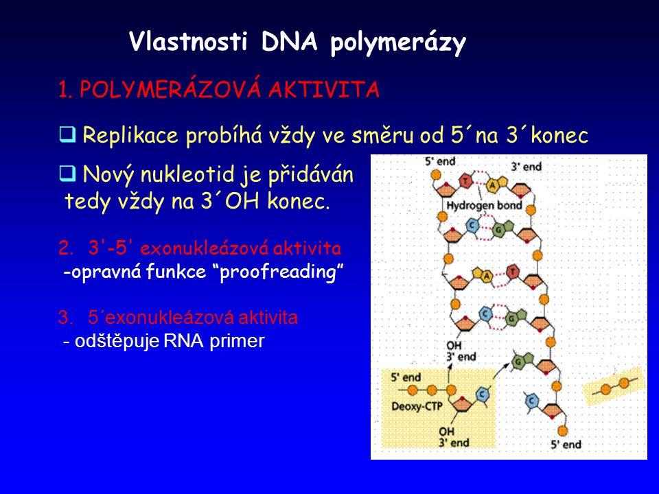 Vlastnosti DNA polymerázy 1. POLYMERÁZOVÁ AKTIVITA  Replikace probíhá vždy ve směru od 5´na 3´konec  Nový nukleotid je přidáván tedy vždy na 3´OH ko