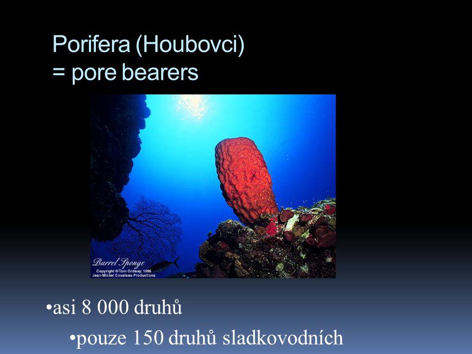 Porifera (Houbovci) = pore bearers asi 8 000 druhů pouze 150 druhů sladkovodních