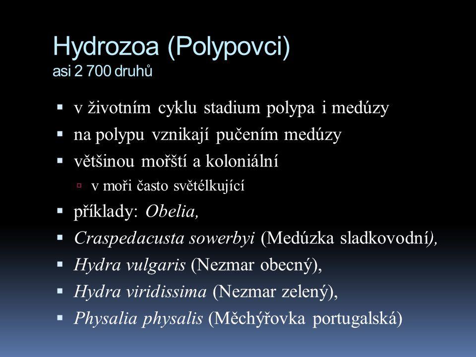 Hydrozoa (Polypovci) asi 2 700 druhů  v životním cyklu stadium polypa i medúzy  na polypu vznikají pučením medúzy  většinou mořští a koloniální  v moři často světélkující  příklady: Obelia,  Craspedacusta sowerbyi (Medúzka sladkovodní),  Hydra vulgaris (Nezmar obecný),  Hydra viridissima (Nezmar zelený),  Physalia physalis (Měchýřovka portugalská)